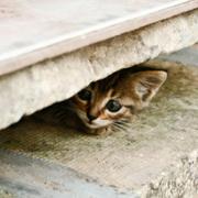 Kitten hiding between concrete slabs