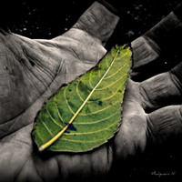 Green leaf in palm of black-and-white hand