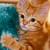 Ginger tabby kitten holding green rug